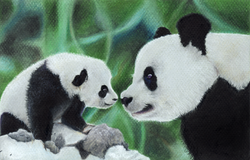 Panda Baby Shower Card