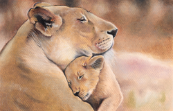 Lioness and Cub Baby Shower Card