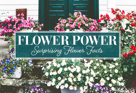 Flower Power: Surprising Flower Facts