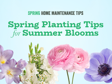 Spring Planting Tips for Summer Blooms