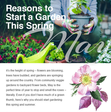 Reasons to Start a Garden This Spring