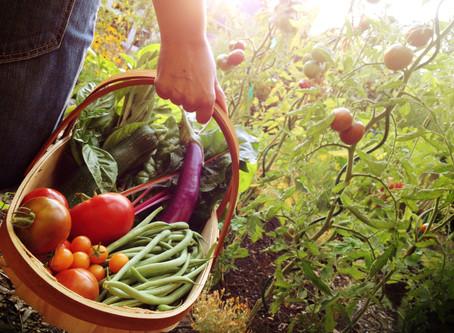 3 Ways to Preserve End-of-Summer Garden Veggies