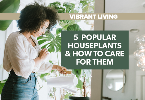 5 Popular Houseplants and How to Care for Them