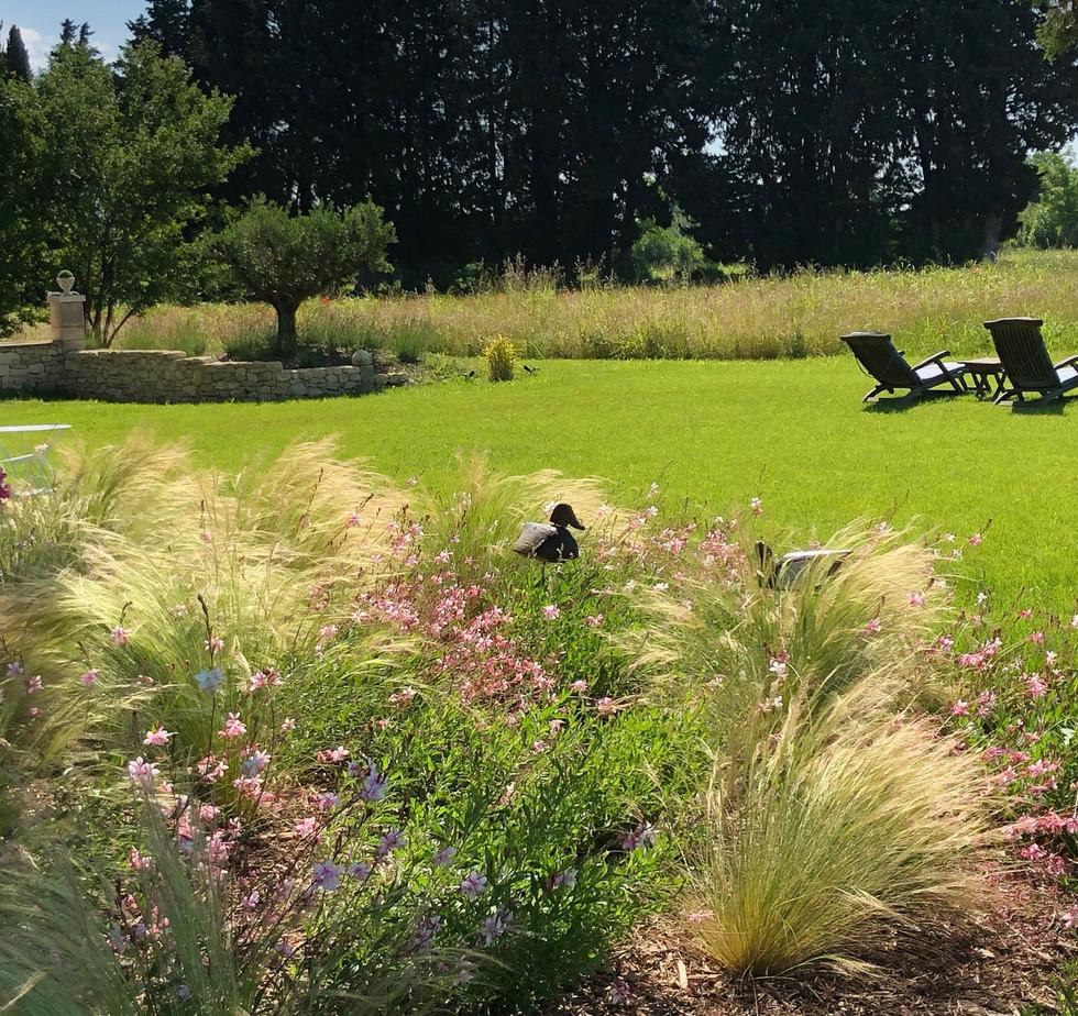 stipa et gora au jardin.jpg