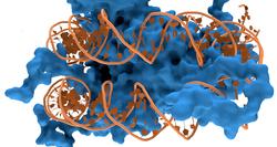 How DNA Is Like A Yo-Yo