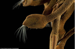 Scientists Discover Six New Species