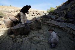 Largest Dinosaur Print Found