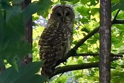 """Wise Owl Says """"Been Vaccinated, Been Liberated"""""""