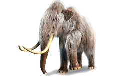 DNA Code For The Woolly Mammoth
