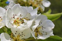 Cherry Blossom Festival Happening Now