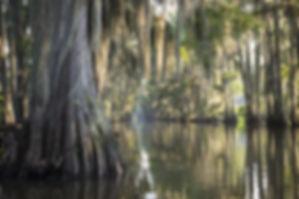 Swamp bayou scene of the American South