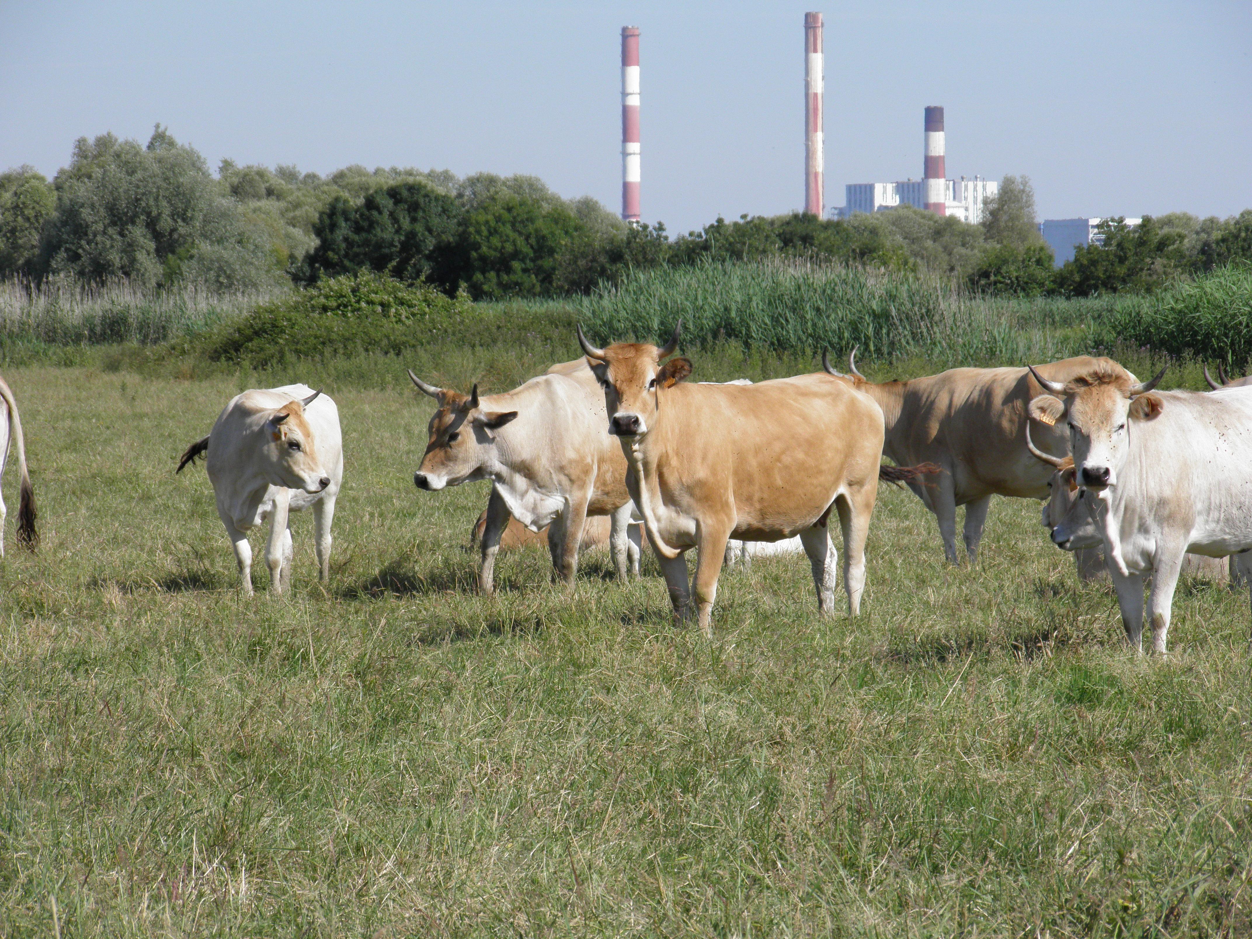 Prairies des bords de Loire
