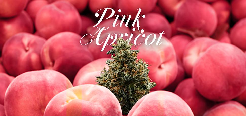 pinkapricotslide.png