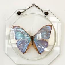 papillon-cadre.jpg