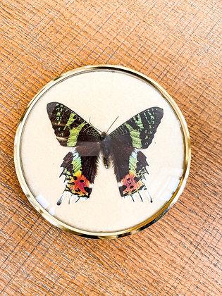 cadre papillon ancien