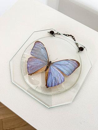 papillon sous cadre