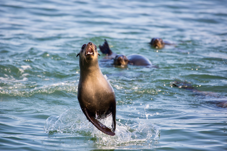 Seal Jump.jpg