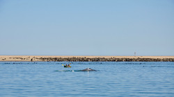 Kayak Whale.jpg