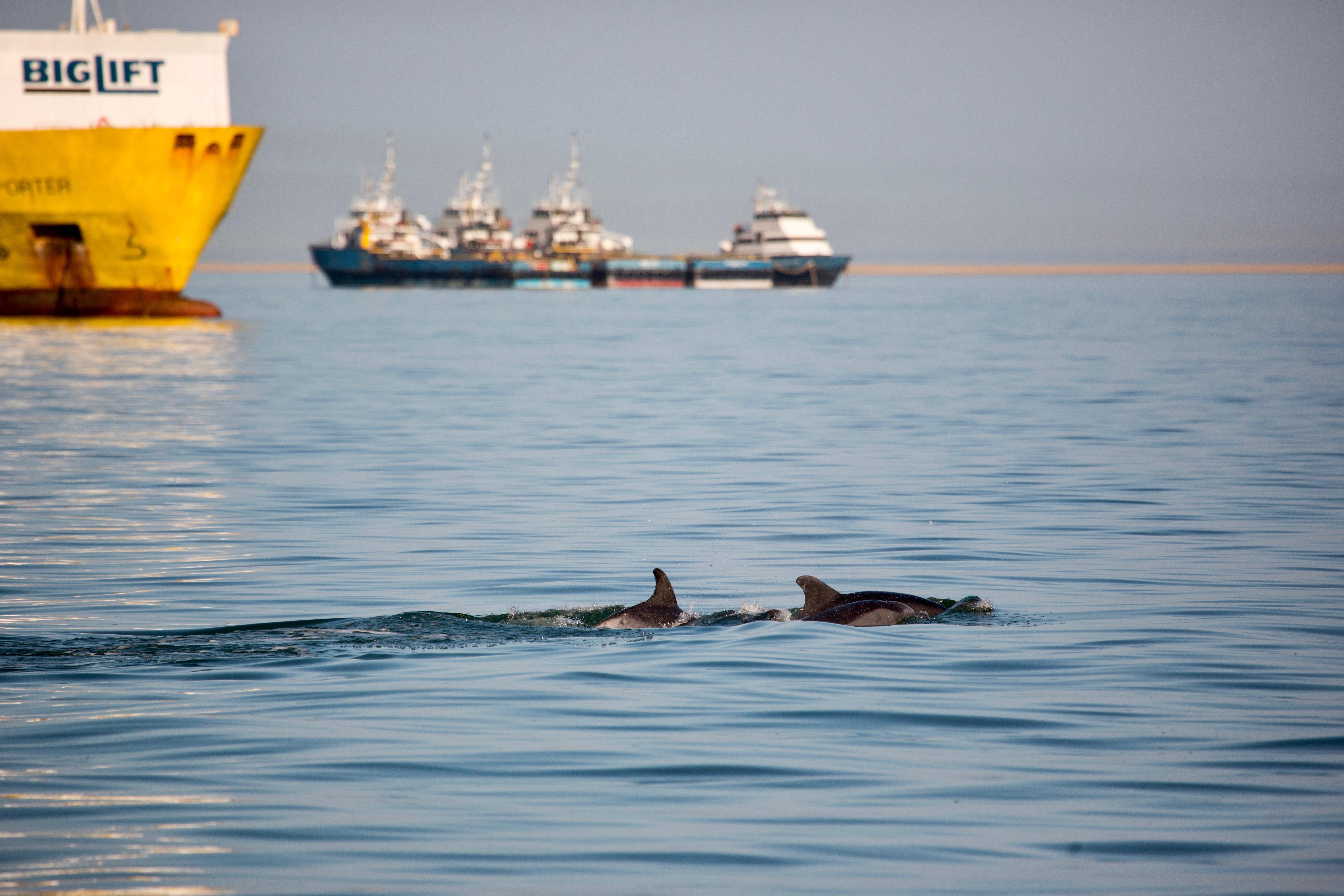 Dolphin ship.jpg