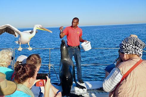 Seal Pelican.jpg