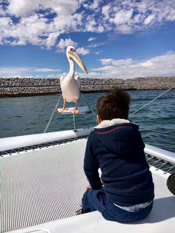 Pelican child.jpg
