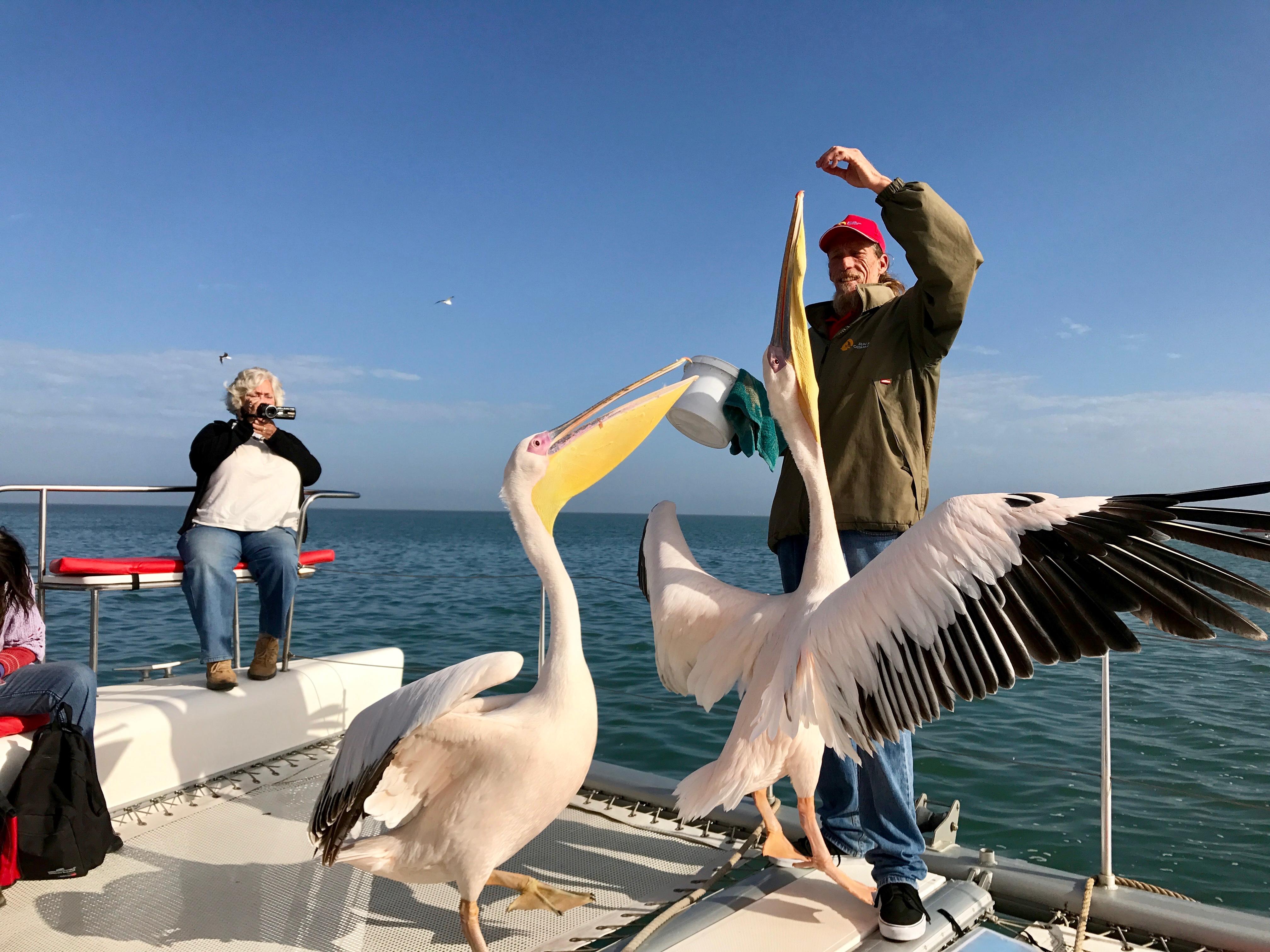 Leon guide pelican.jpg
