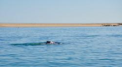 Whale fin.jpg