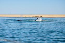 Whale Flap.jpg