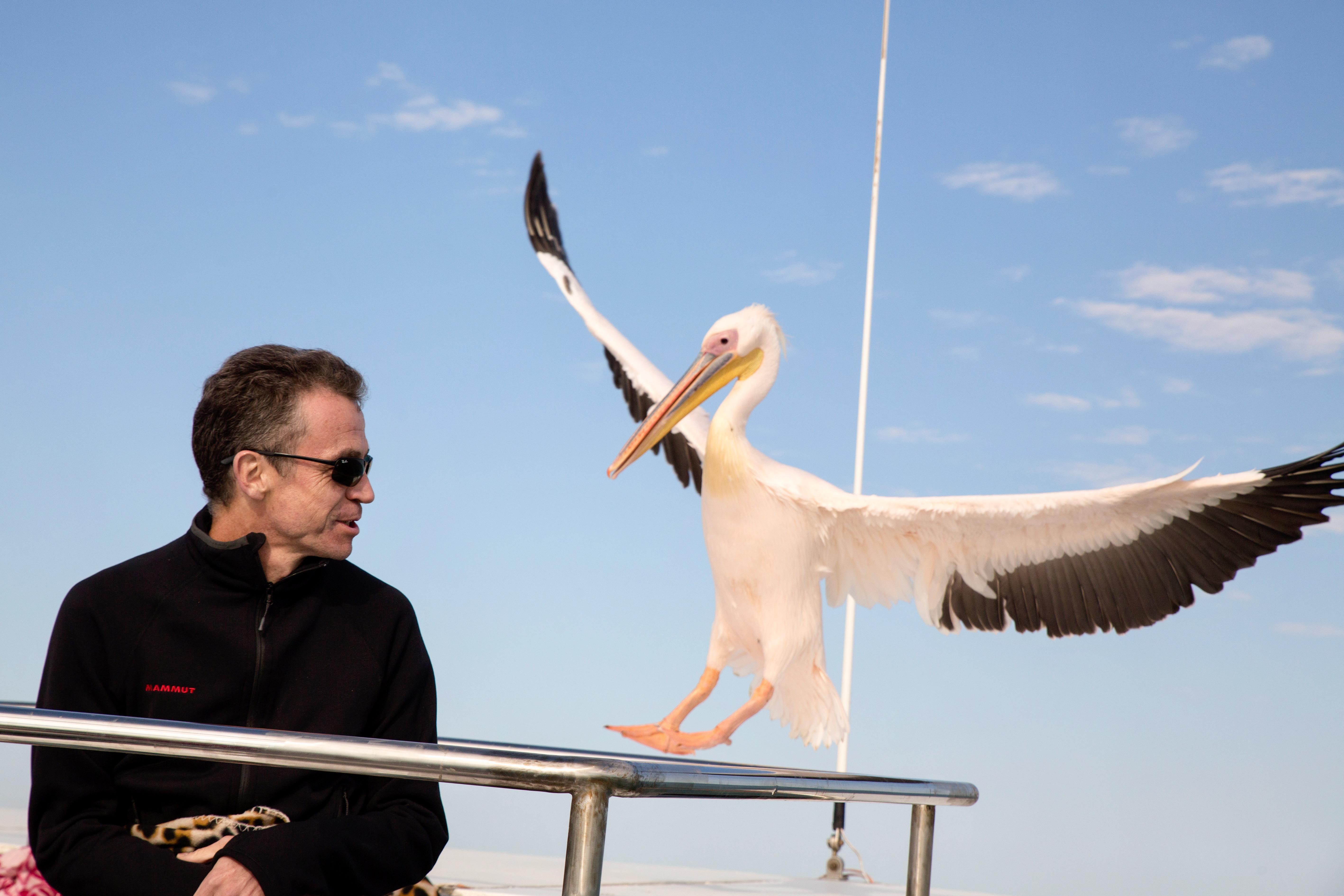 Pelican man incoming.jpg
