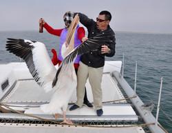 Pelican Man.jpg