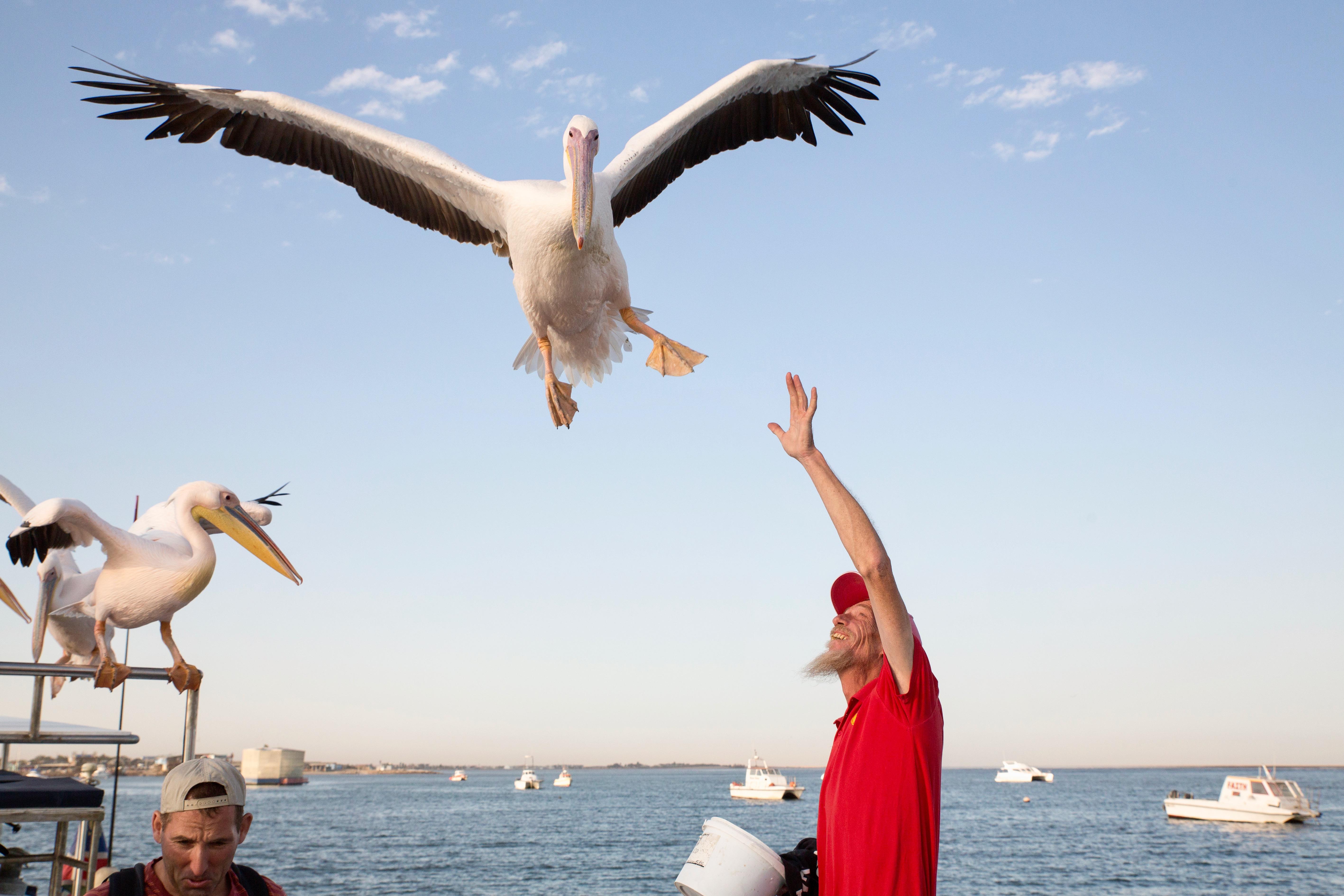 Leon Pelican.jpg
