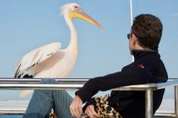 Pelican man seated.jpg