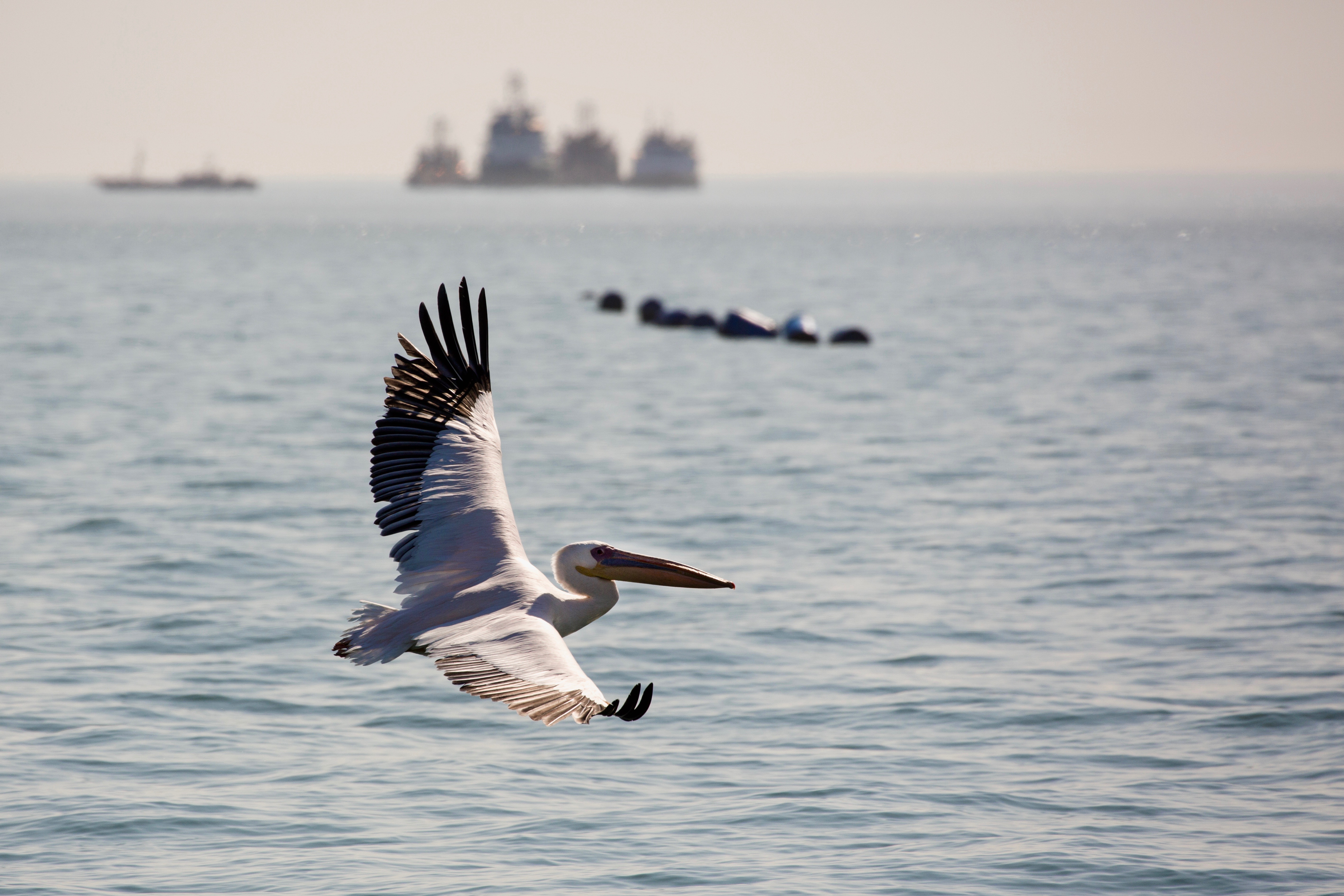 Pelican ship.jpg
