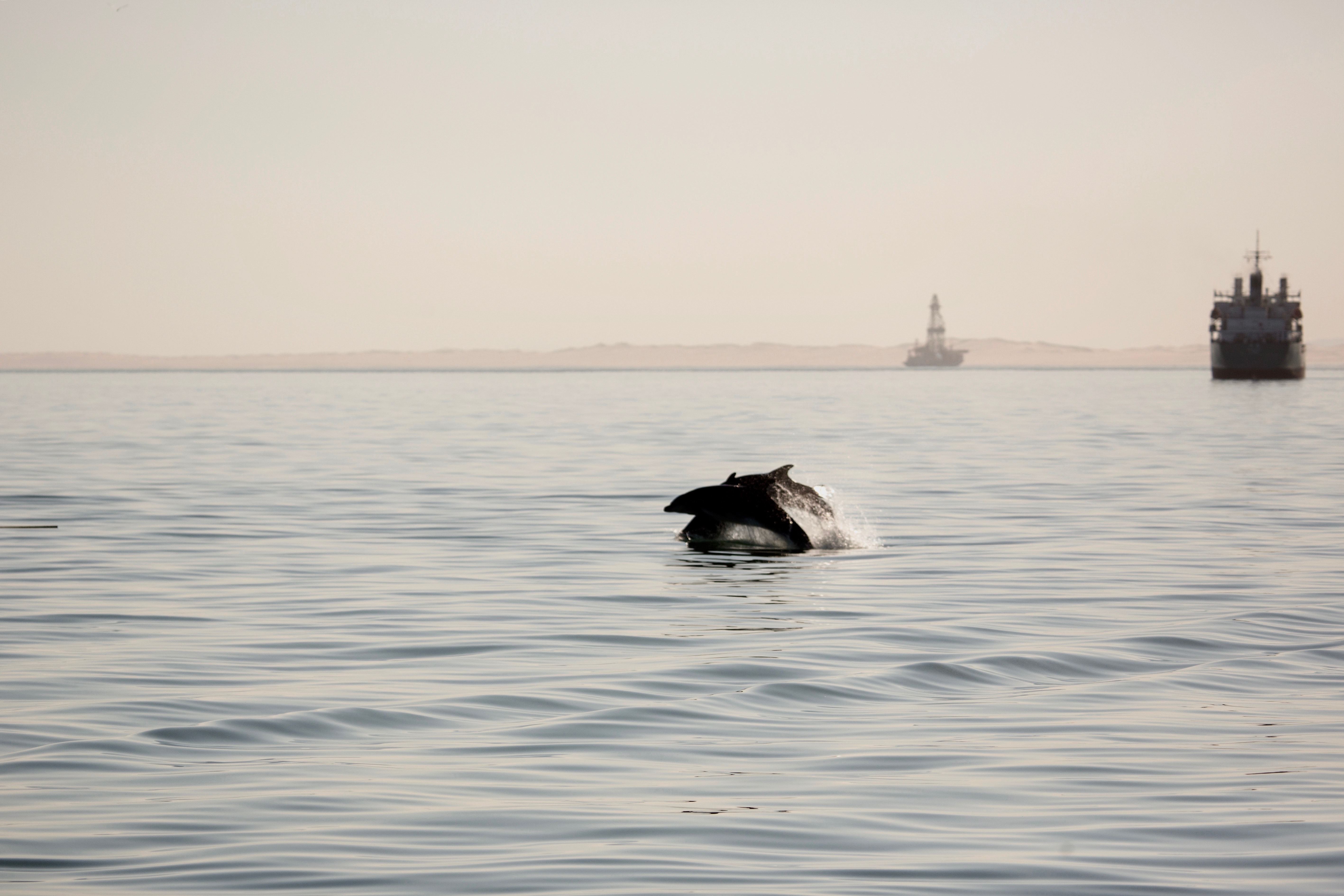 Dolphin jump.jpg