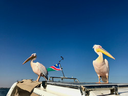 Pelican flag.jpg