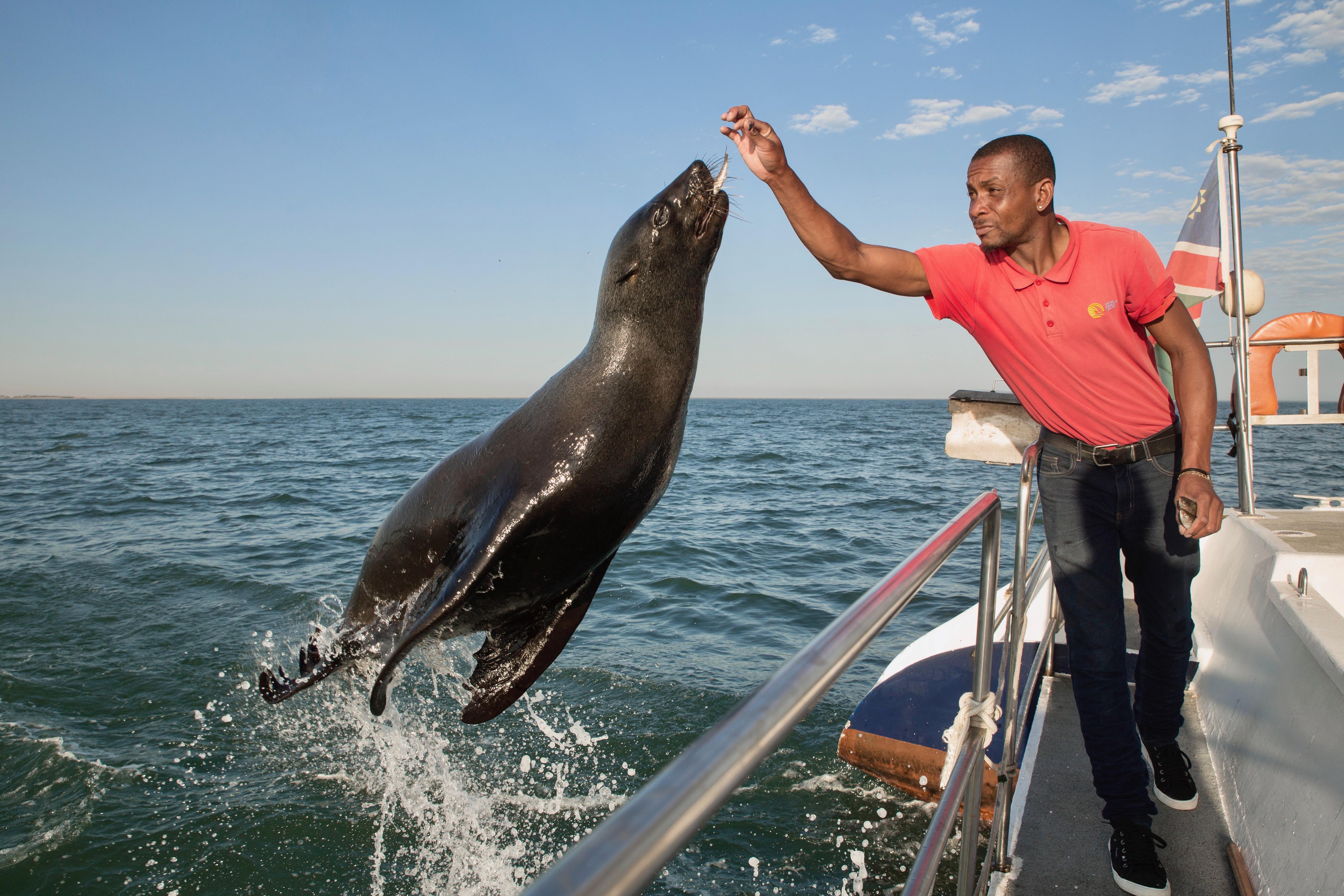 Seal jump Abed.jpg