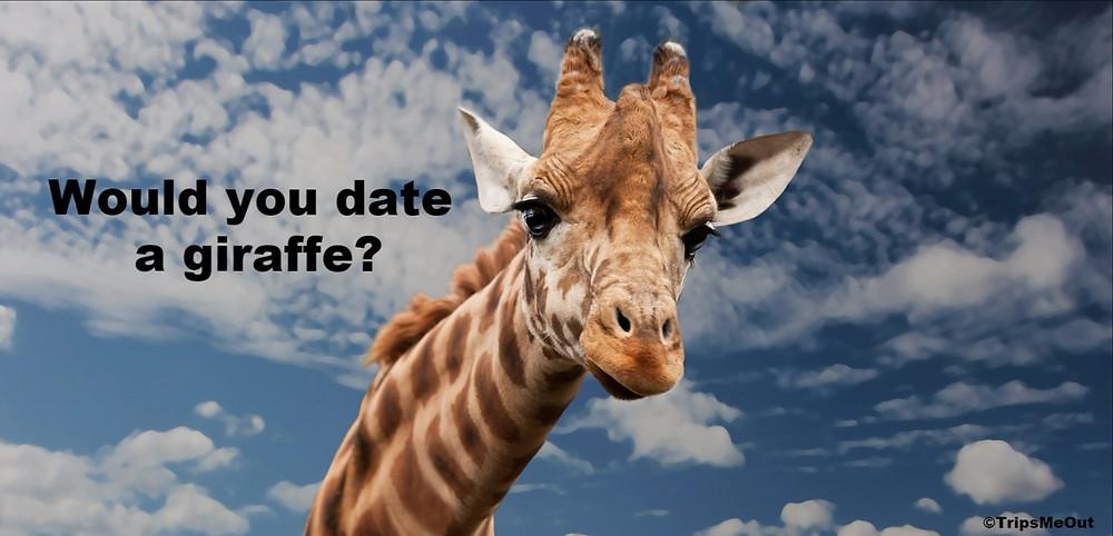 Would you date a giraffe?