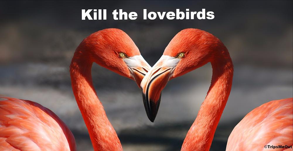 Kill the lovebirds