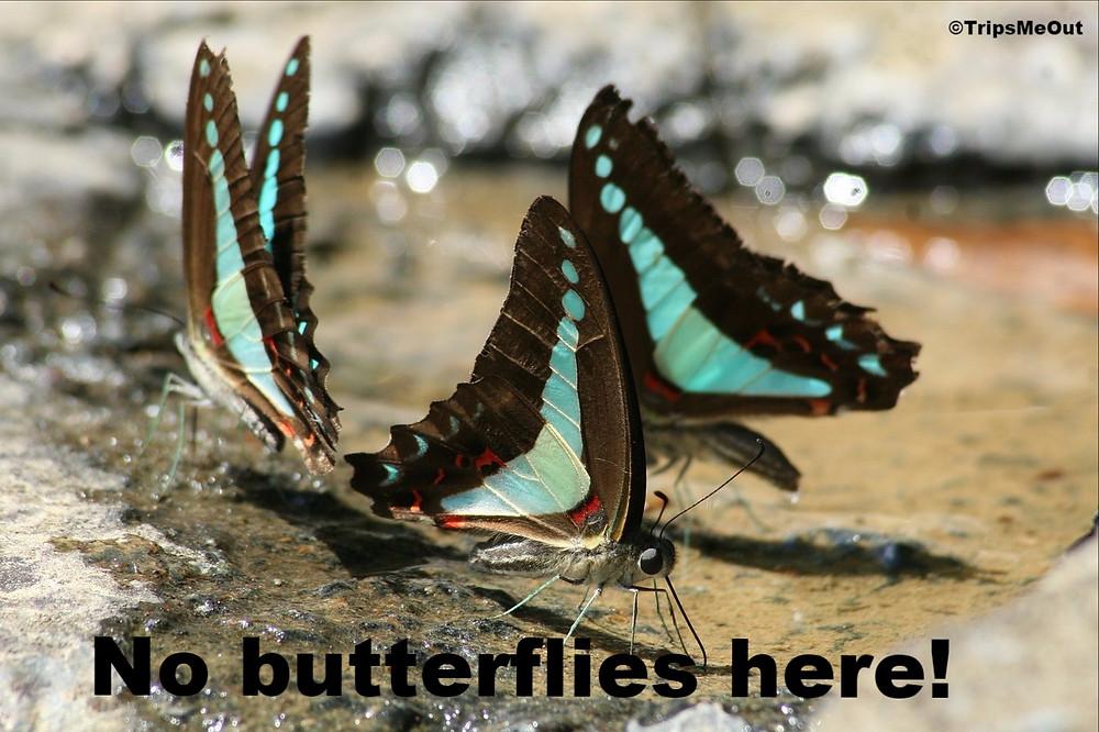 No butterflies here!