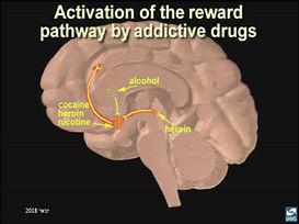 reward pathway.JPG