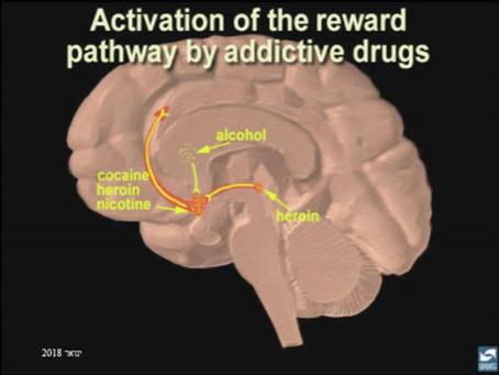 למה סמים גורמים להתמכרות?