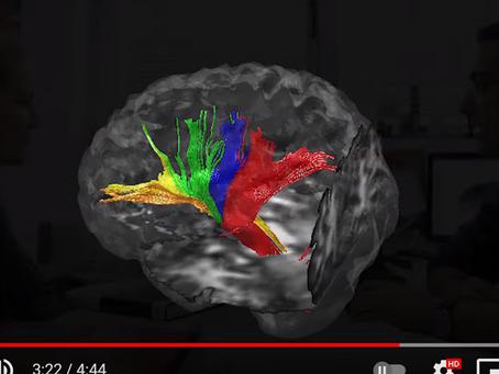 רגש קשב וזיכרון, וספריית הרגשות של המוח