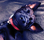 Missy OllisPhoto Dog1487 B.jpg