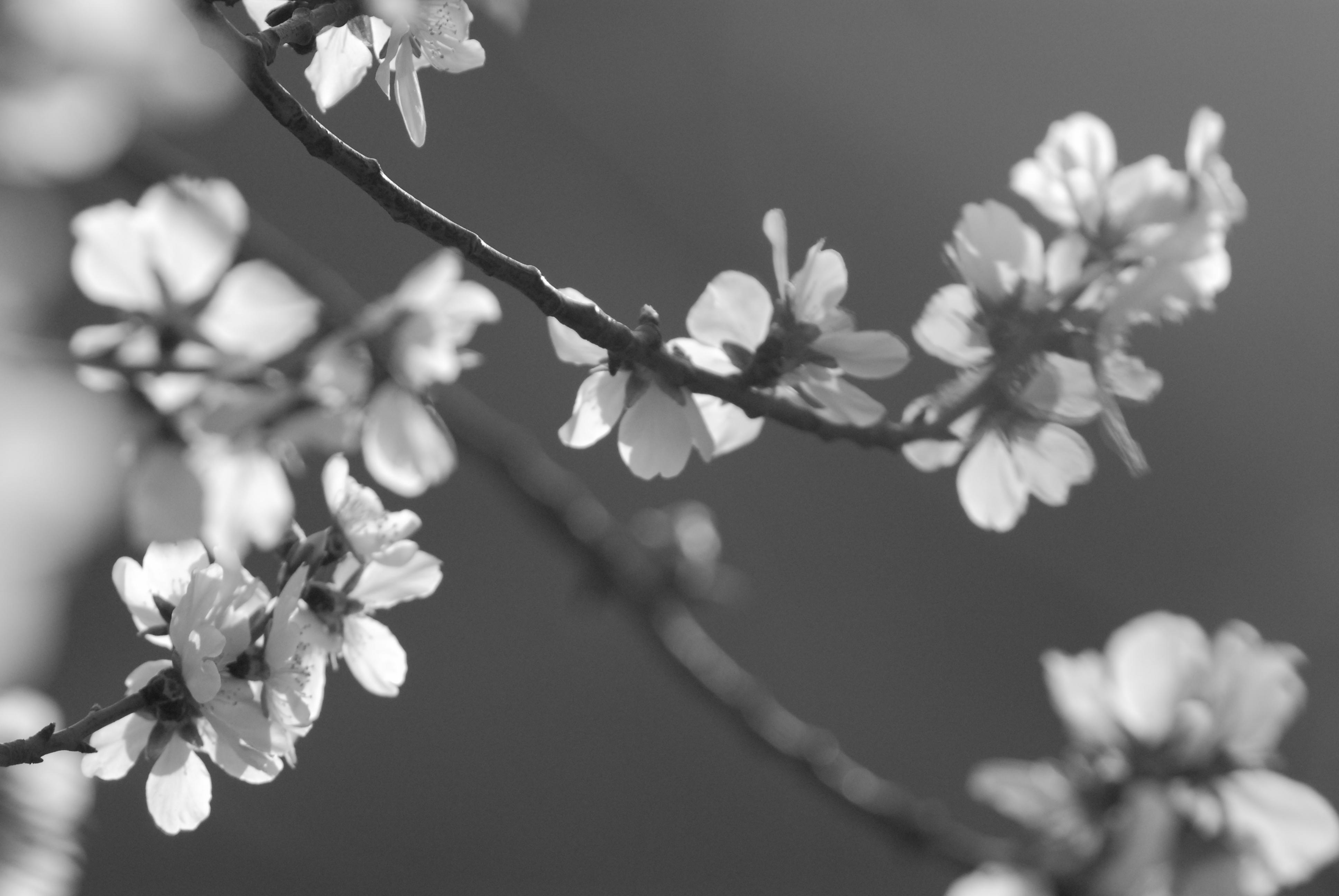 Spring arrives II