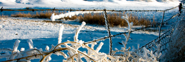 Barbed Winter