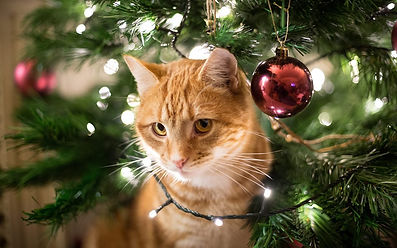 close-up-of-ginger-cat-by-christmas-tree