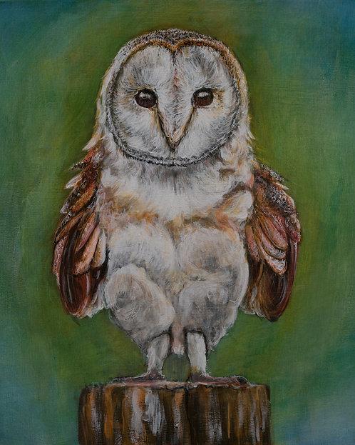 Baby Owl Print