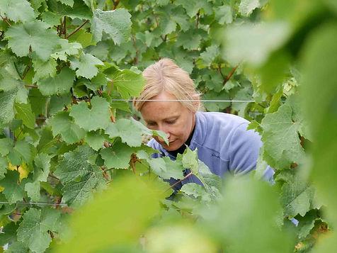 Winzerin Sandra Sauer vom Weingut Horst Sauer aus Escherndorf Franken bei der Arbeit im Weinberg