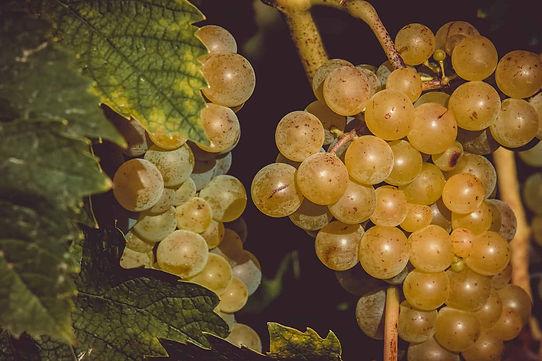 grapes-3638444_1920-min.jpg