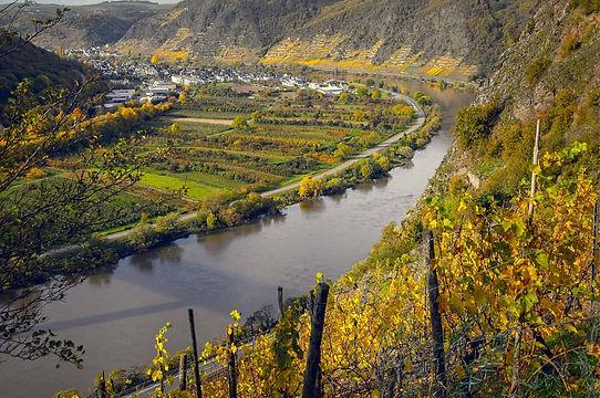 vineyards-4666055-min.jpg